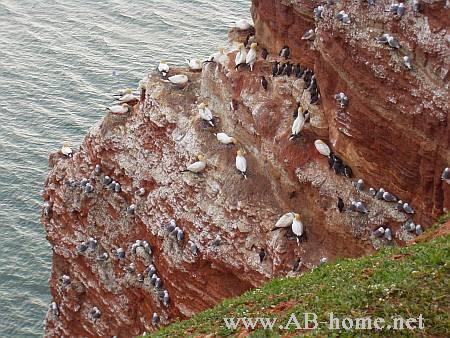 A Redrock from the Highland on Helgoland.