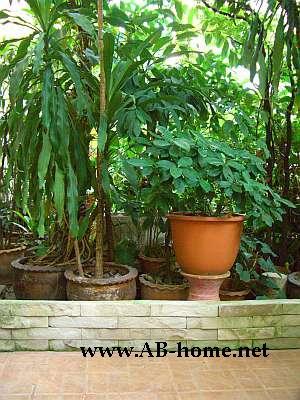 Sri Ayuttaya Guest House