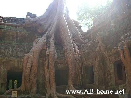 Wat Ta Prohm