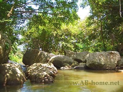 Jungle Pool at the Waterfall
