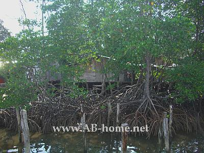 A House in Mangroves