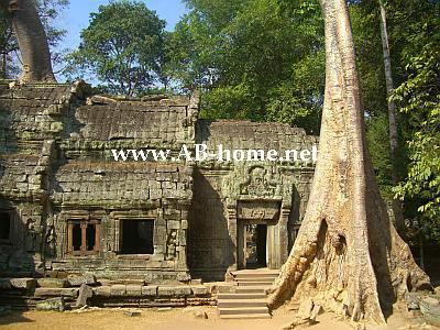 Ta Prohm at Siam Reap